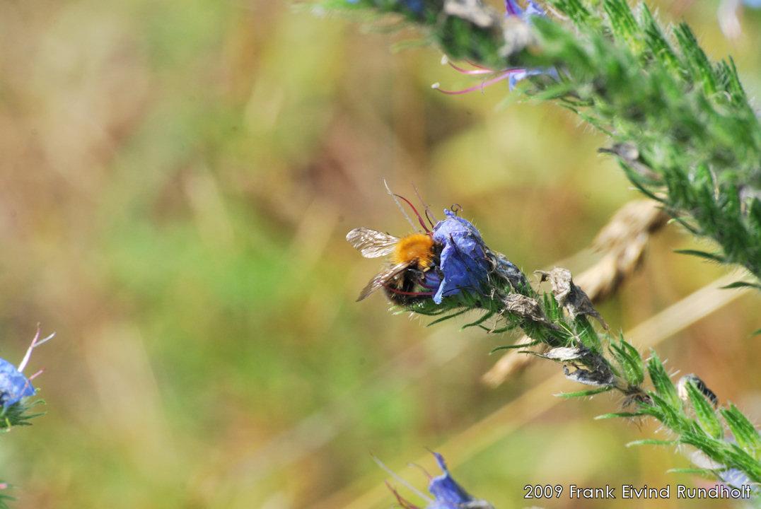 Bilder av insekter