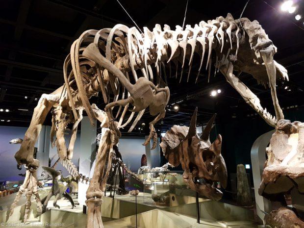 forhistorisk museum om dinosaurer