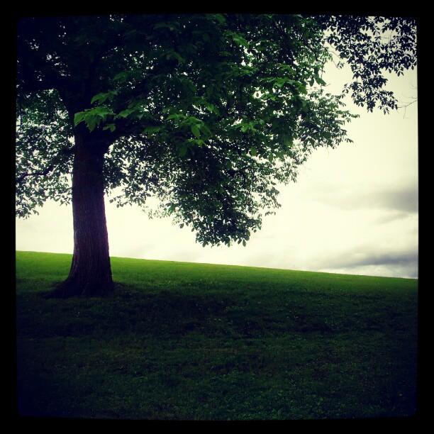 Instagram: #Torshovparken #torshov #tre #tree #hill #bakke #gress #grass #grønn #green #silhouette