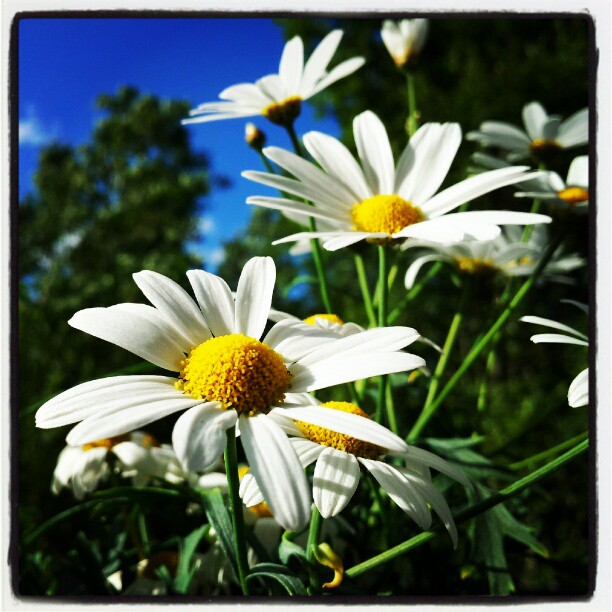 Instagram: Margeritter