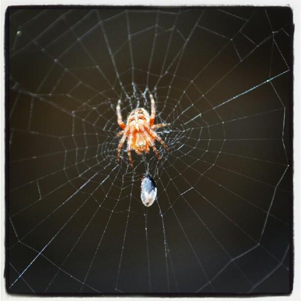 Instagram: 'Lille Petter edderkopp'