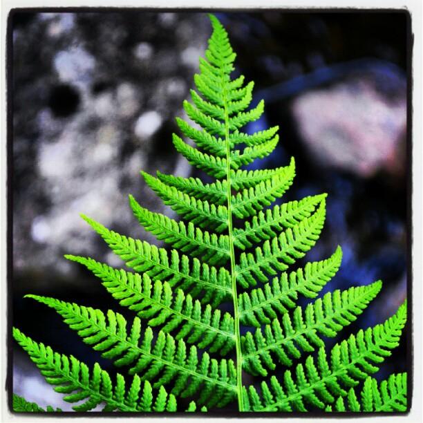 Instagram: Naturens fraktaler