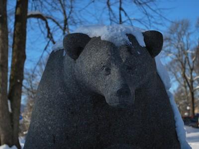 En bjørn.