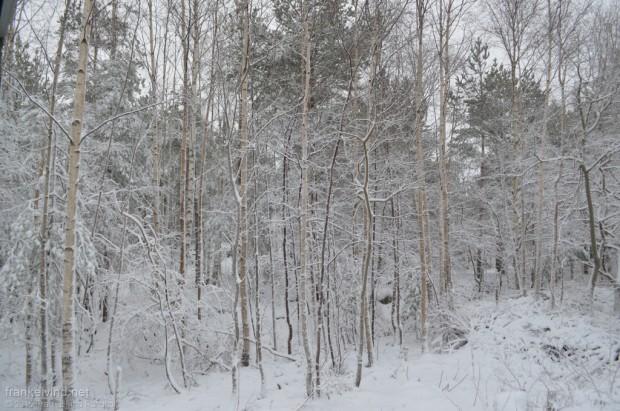 2015 Frank Eivind Rundholt
